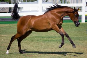 STOCK - Equitana 2013-95 by fillyrox
