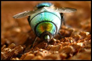 Fly's Behind by FramedByNature