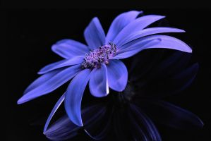 Reflections of Sennetti by aquapell