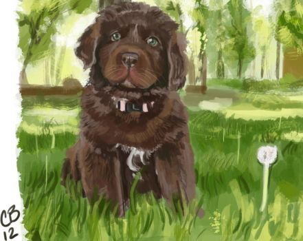 Newfie pup photo study by sketchdoll