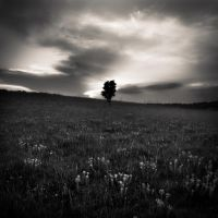 grass,tree... II by denis2