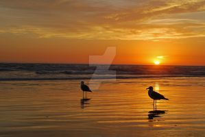 Seagulls in the Sunset 1 by catilakbluez