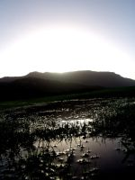 the Wetlands by insid3out