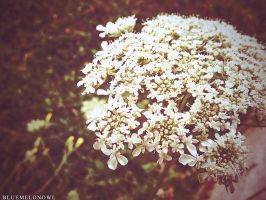 White. by BlueMelonOwl