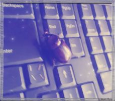 beetle and buttons by DarraChese