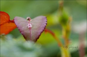 Heart by ILTBY