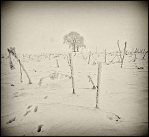 Winter IV by mikeb79