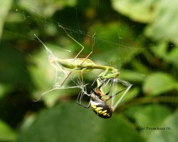 Web Shooter by natureguy