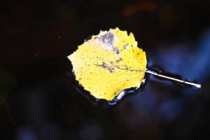Signs of Autumn. by JadeGreenbrooke