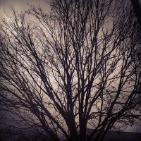 The Darkening Tree by RockyRoxas13