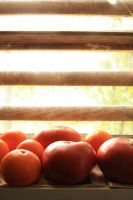 Tomatoes by LenaSt63
