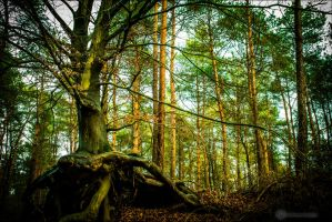 The Tree by db-photoblogDOTcom
