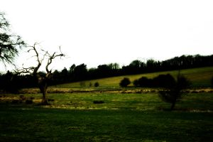 Landscape of a farm by AJCG1976