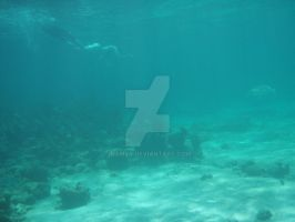 TME Akumal, Mexico: Diving with Turtles by Namyr