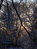 Branches in winter by Irkaaa