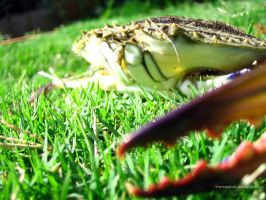crabgrass by therealarien
