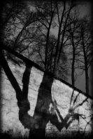 Shadow and life by darkphotographe