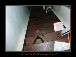 A Bat In My House by caracal