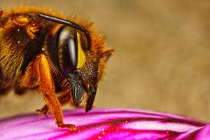 Mason Bee April 09-1 by dalantech