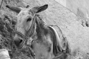 The donkey speaking about ears by Capitan-Mark-Antony