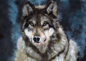 Gray Wolf by BarefootTiger
