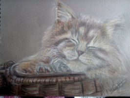Maine Coon kitten (quick sketch) by DieDefunctorum