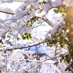 First Snow by Arctida