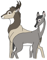 Tun and Tan adult deer by Maxrunn