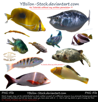 Indic Ocean Fishes I by YBsilon-Stock
