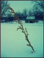 Frozen life by 86Botond