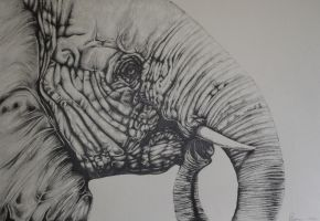 Elephant in Pencil by donnaleedawn