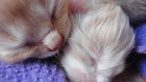 newborn kittens 5 by caminime