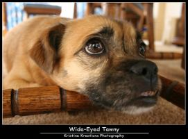 Wide-Eyed Tawny by KristineKreations