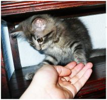 Playing with the kitten. by Anakisha