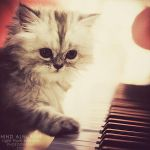 I will play the song for you.. by light-from-Emirates