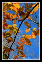Fall Leaves 5647 by DG-Photo