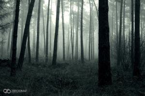 Sport City Woods by ZQPhotography