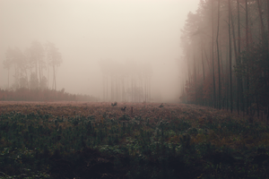 hidden in the fog by ConceptualMiracles
