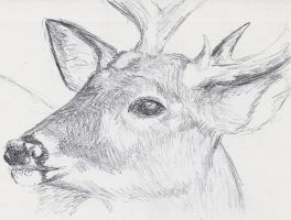 Small Sketch: Deer by JacquelineChroma