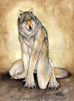 Sitting Wolf by Goldenwolf