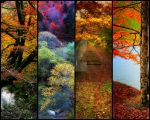 Slices of Autumn Beauty by kyptanuy