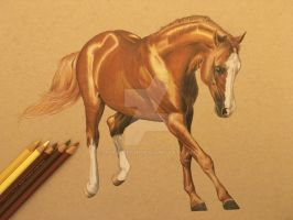 Colored Pencil Horse by JoyWalsh