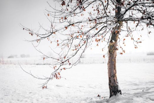 Winter poetry by Zelma1