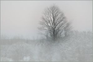 winter field by barefootliam