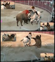 """Bullfight """"accidente"""" by XNS"""