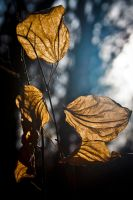 Approaching Autumn by AdamBrownPhoto