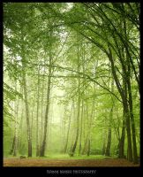 Green world: Trees by manroms