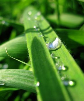 Morning dew by M-e-t-a-t-r-o-n