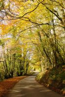 Autumn Curves by WillAustinsArchive