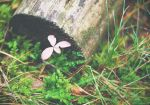 Little pink by Anlin